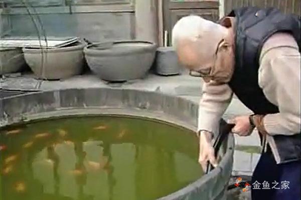 金鱼大师刘景春谈学养金鱼——养鱼先养水