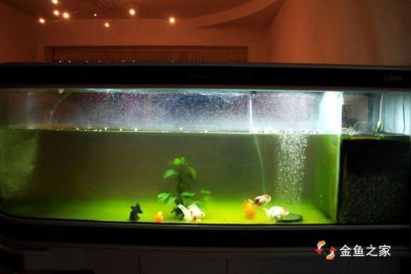 使用uv灯之前水中藻类多,水质不清