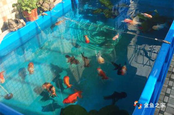 塑料水槽饲养金鱼