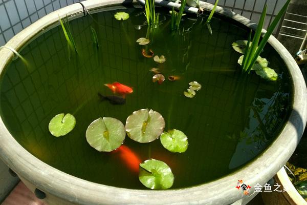 换水频率和换水量要根据水色来适当增减